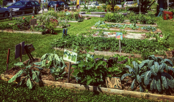 Urban Agriculture Growing In Blair County, PA